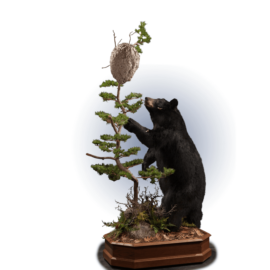 black bear and bees nest pose