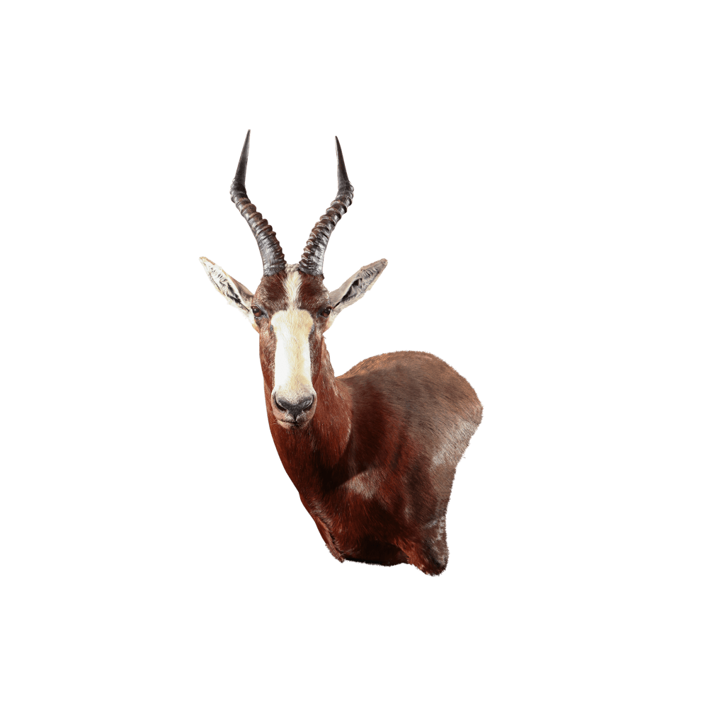 blesbok wall mount