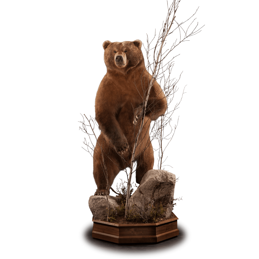 Brown bear standing up with tree pedestal mount