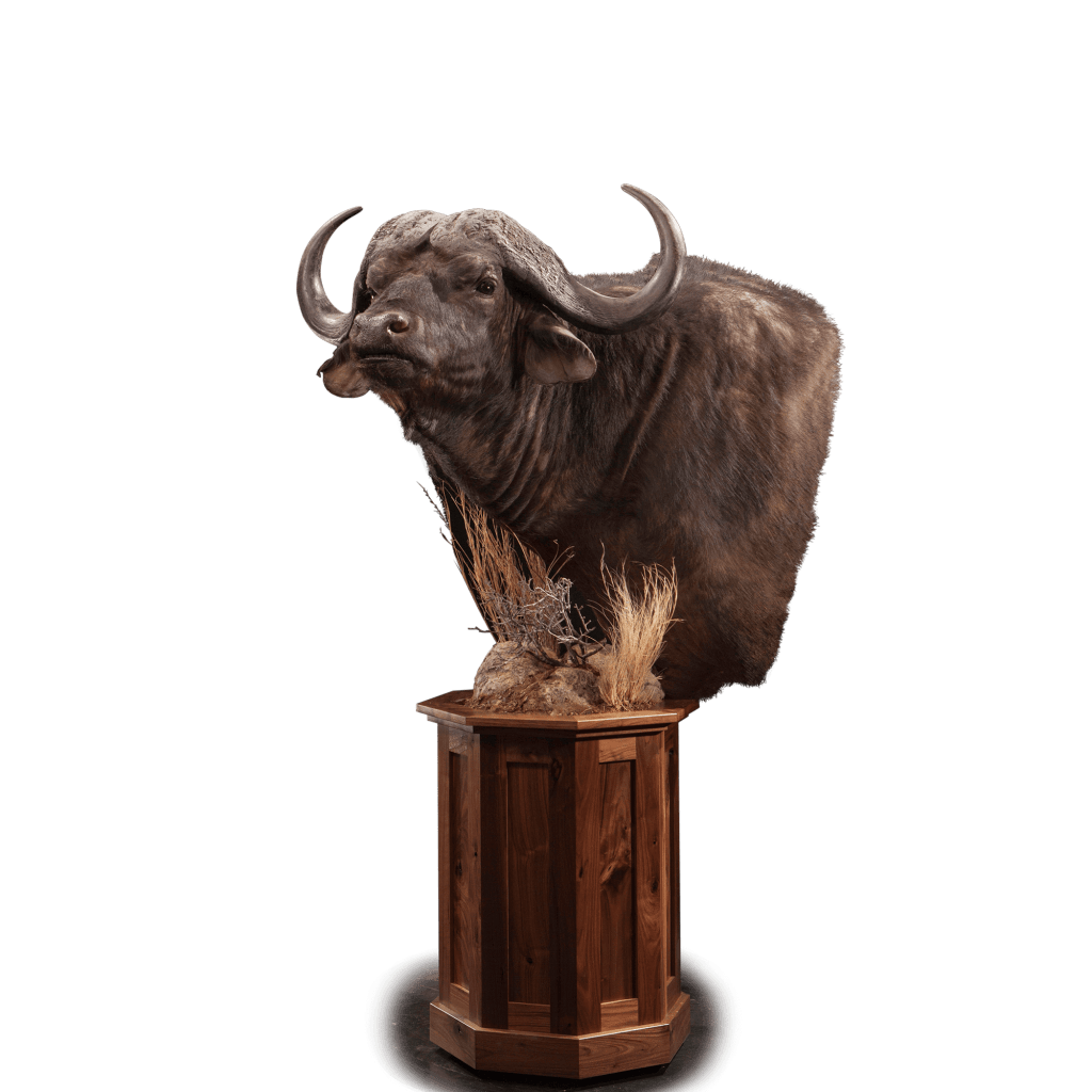 cape buffalo pedestal