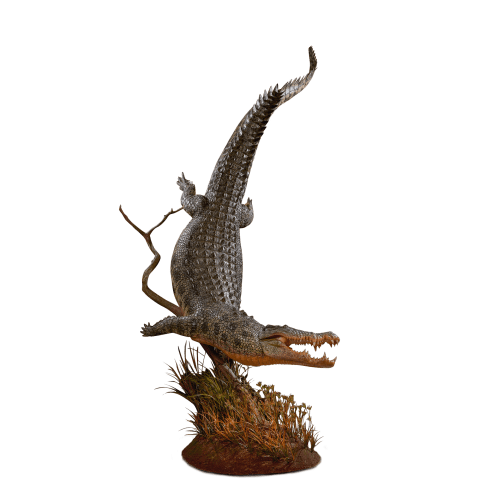 crocodile full size mount