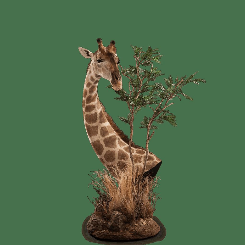 giraffe & tree pedestal mount