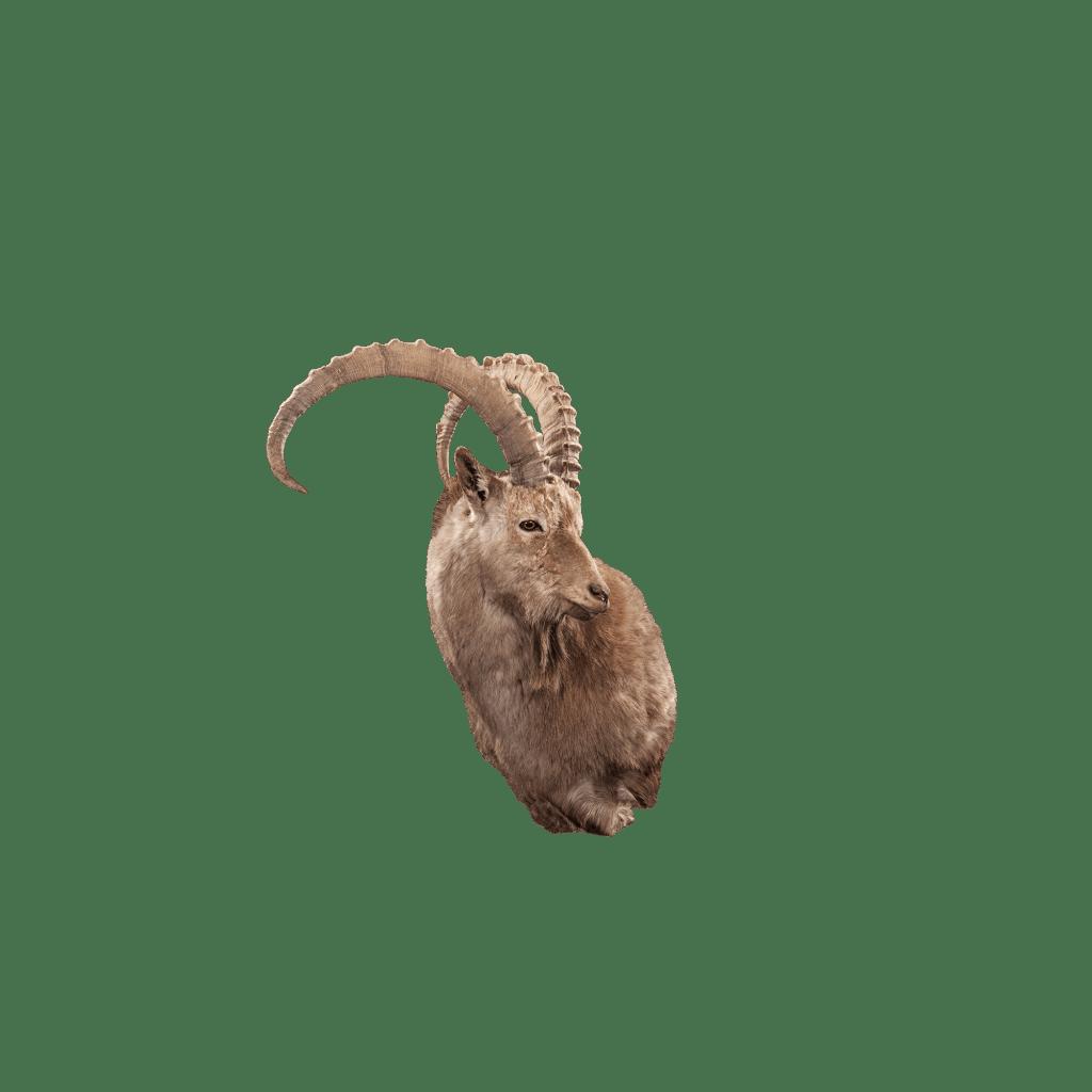 ibex shoulder mount