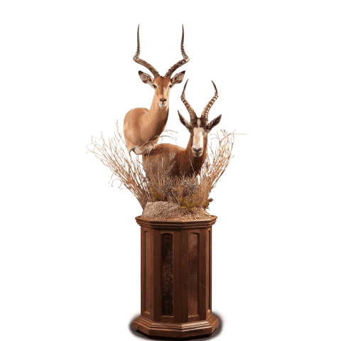 impala and blesbok pedestal mount