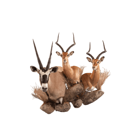 african animals taxidermy