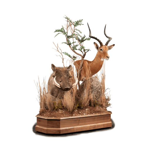 impala and warthog pedestal taxidermy