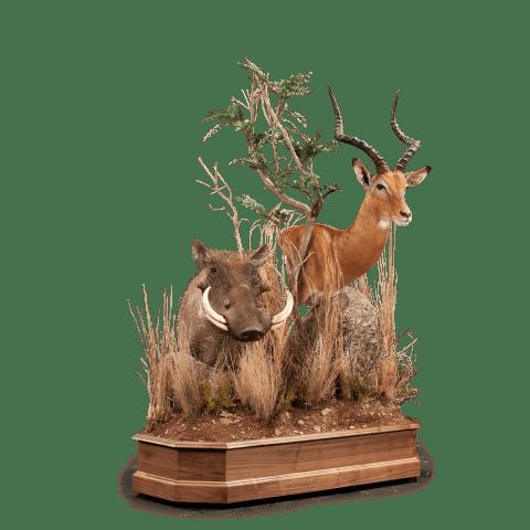 impala and warthog pedestal taxidermy