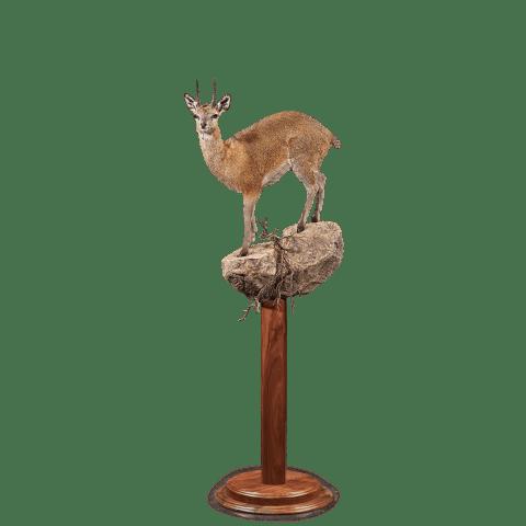 klipspringer life size pedestal