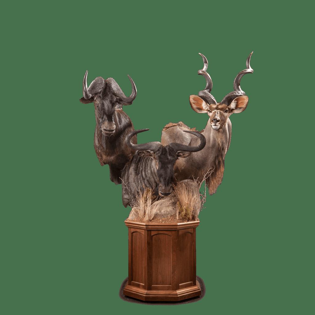 kudu and wildebeests taxidermy