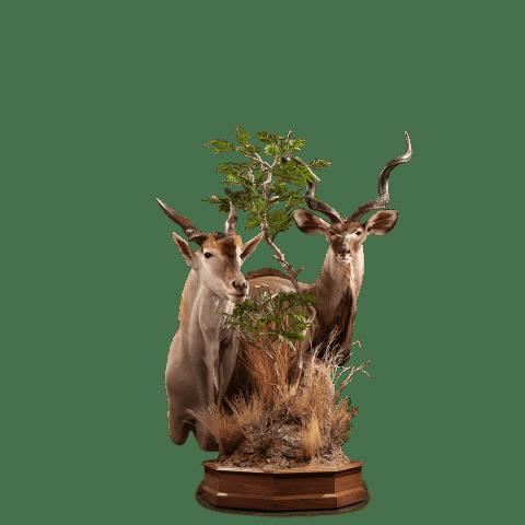 kudu eland pedestal mount