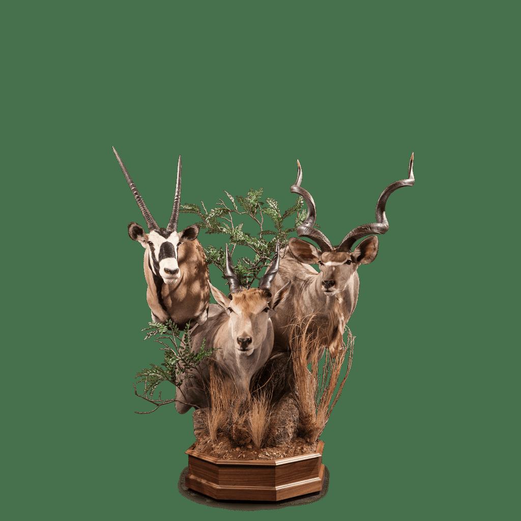 kudu gemsbok eland pedestal mount