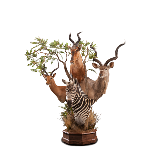 kudu impala hartebeest zebra pedestal taxidermy