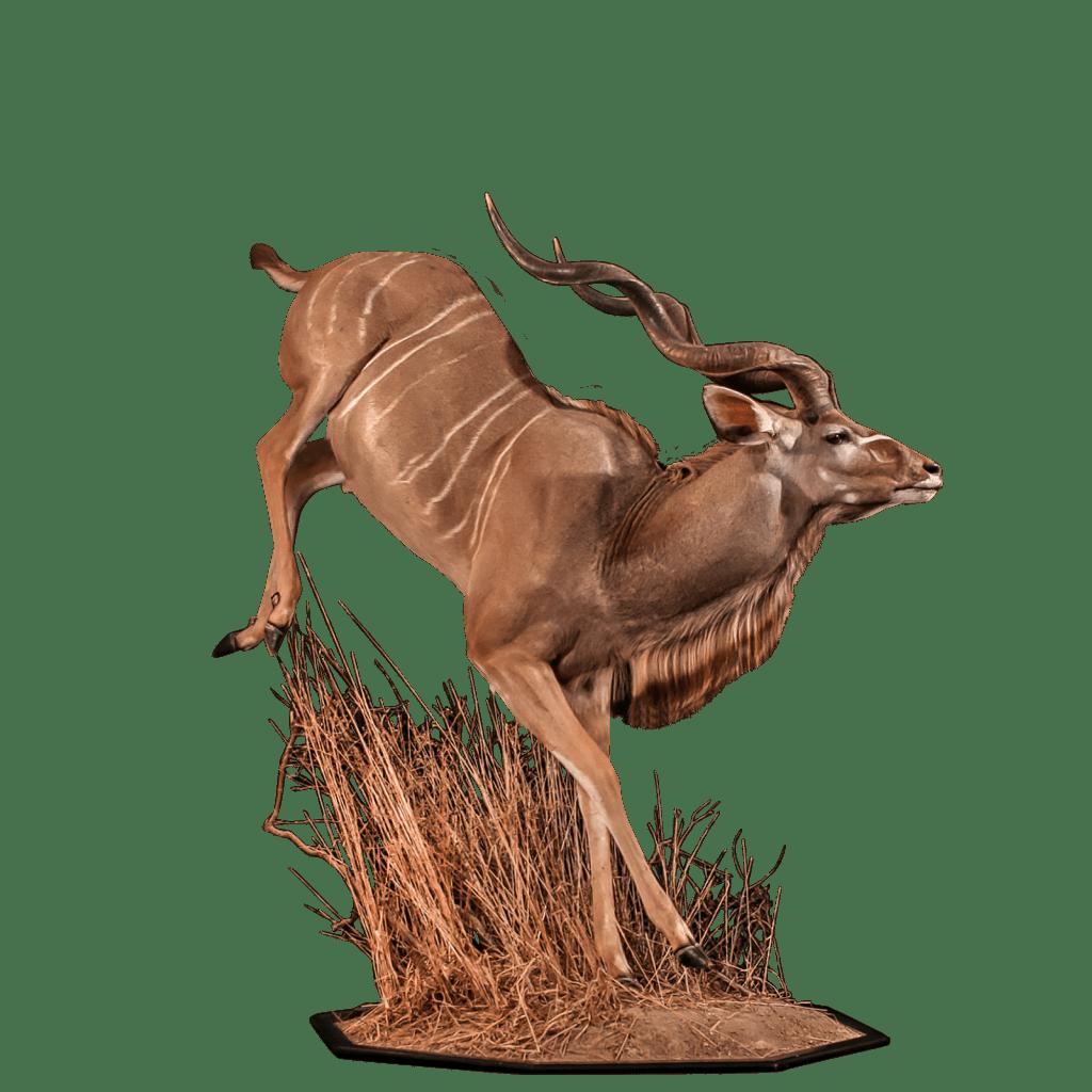 running kudu taxidermy
