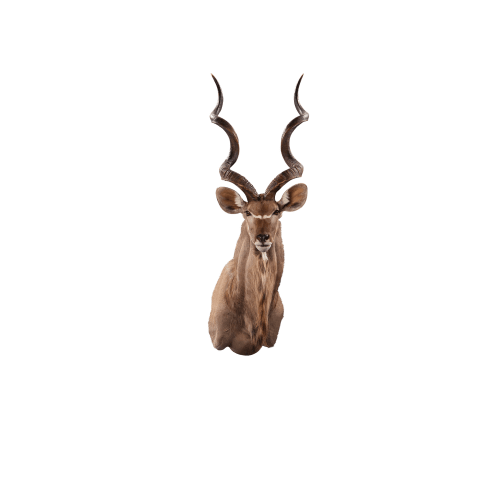 kudu shoulder mount