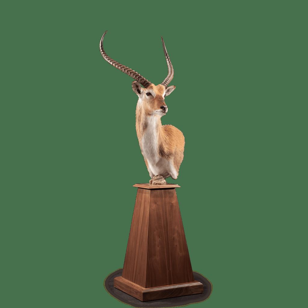 lechwe pedestal