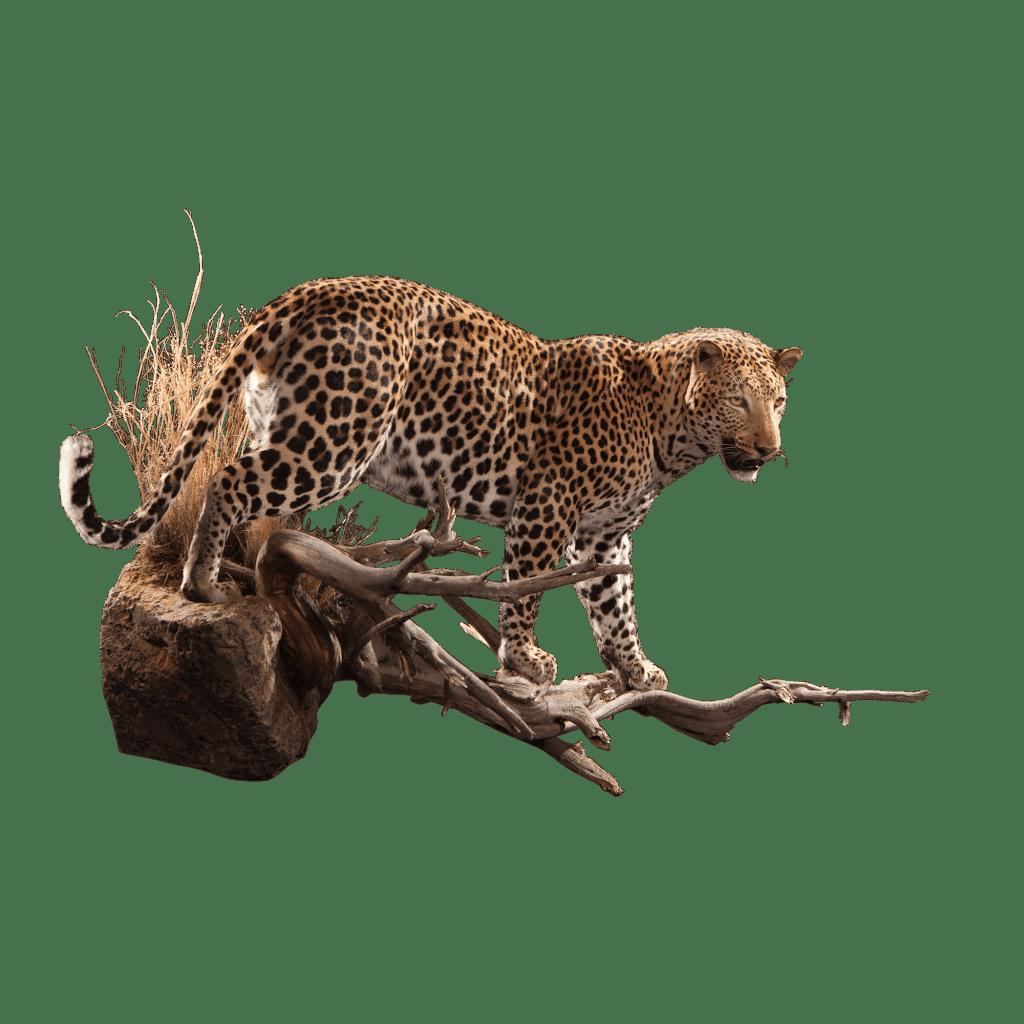 leopard replica