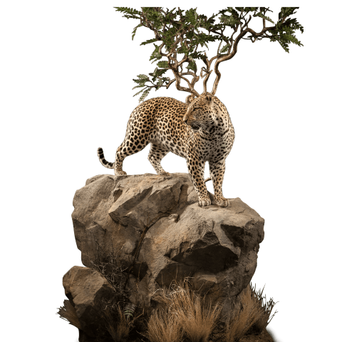 leopard on rocks mount