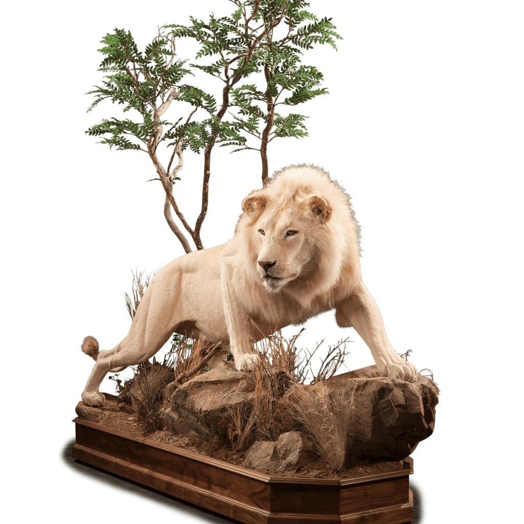 full size lion on rock mount