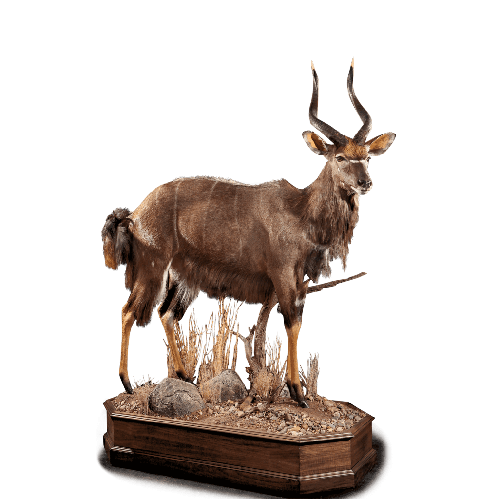 full size nyala mount