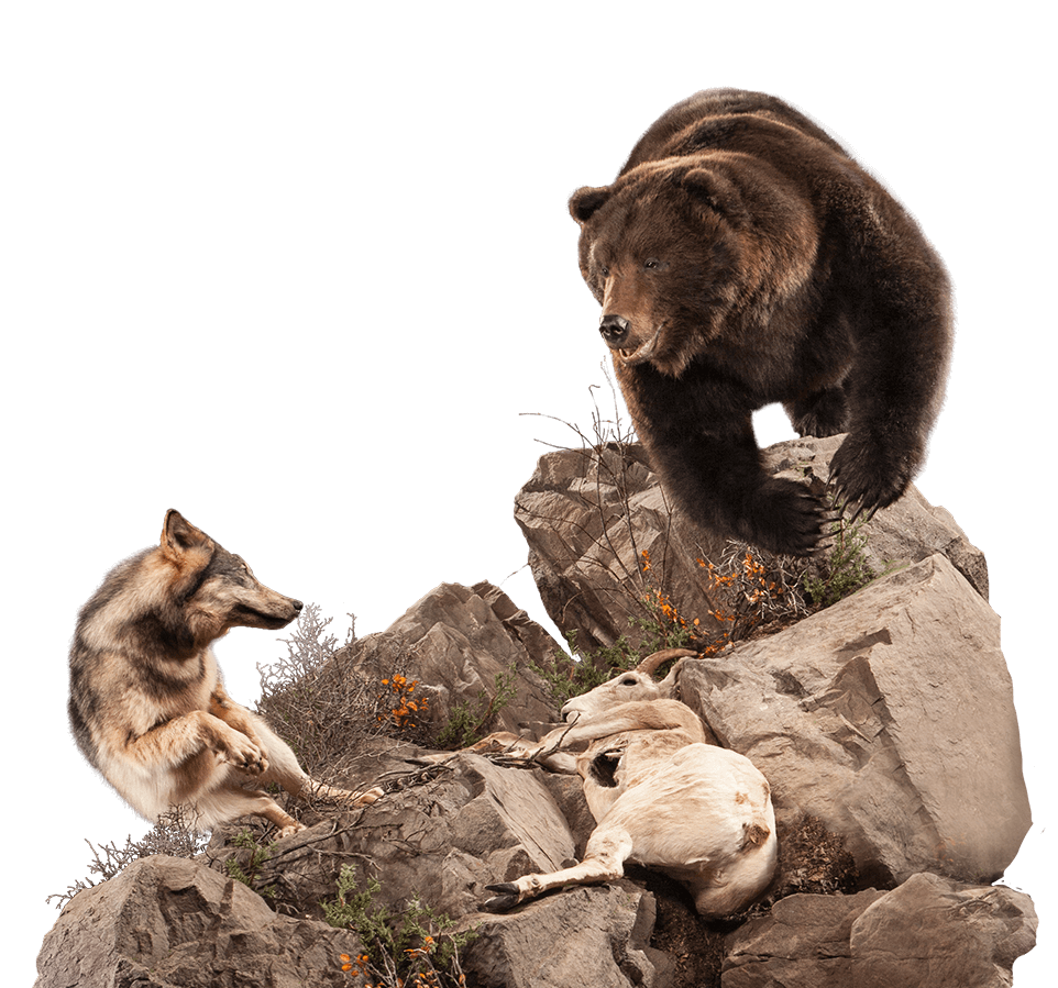Taxidermy bear chasing off a wolf