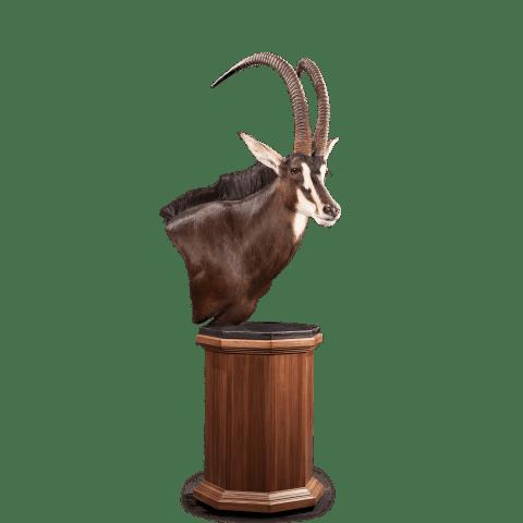 sable pedestal