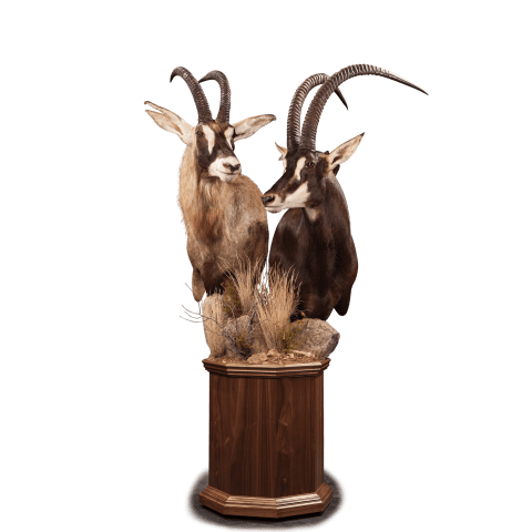 sable roan pedestal mount