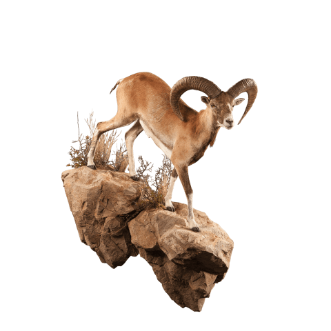 urial life size mount