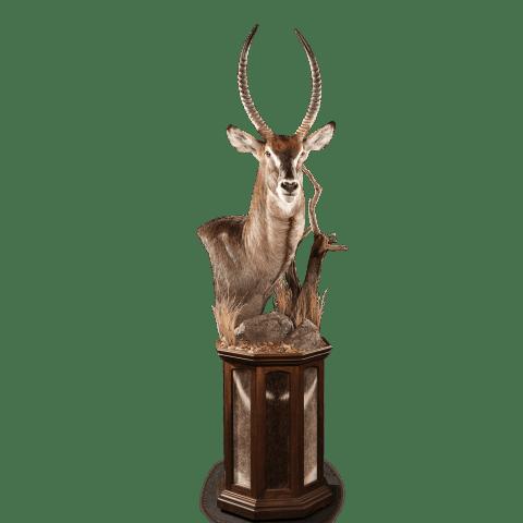 waterbuck pedestal