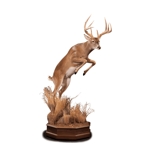 Lunging whitetail deer taxidermy
