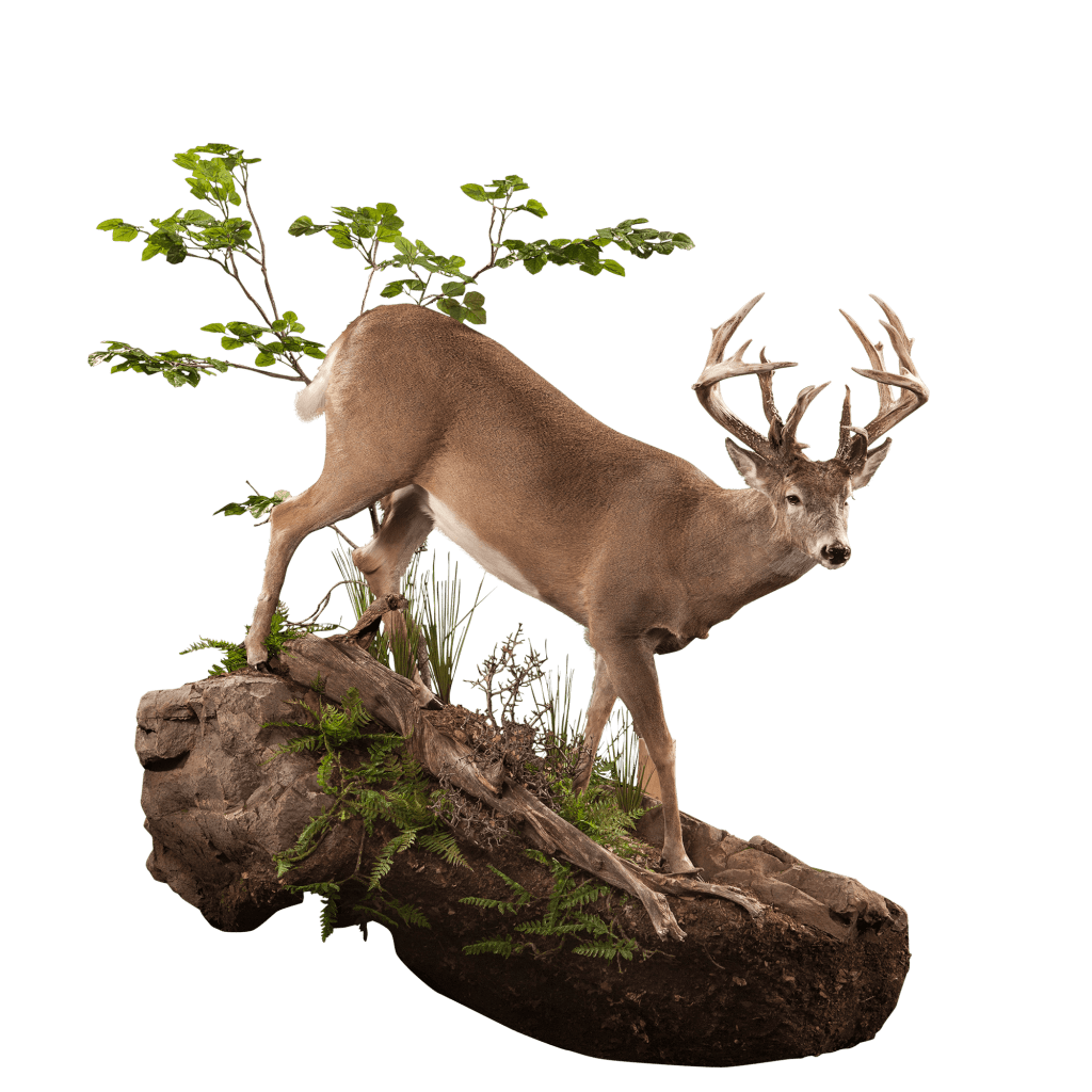 Whitetail deer on cliff mount