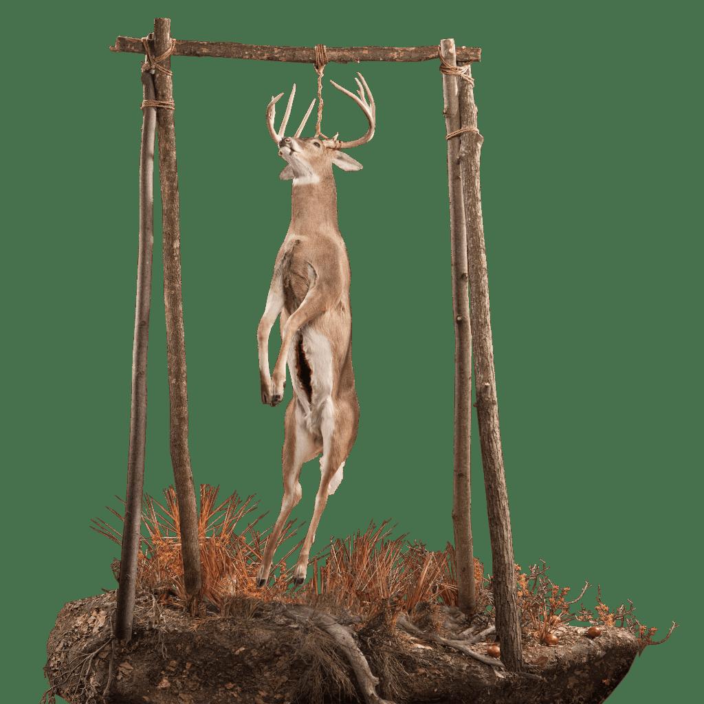 Whitetail lifesize taxidermy