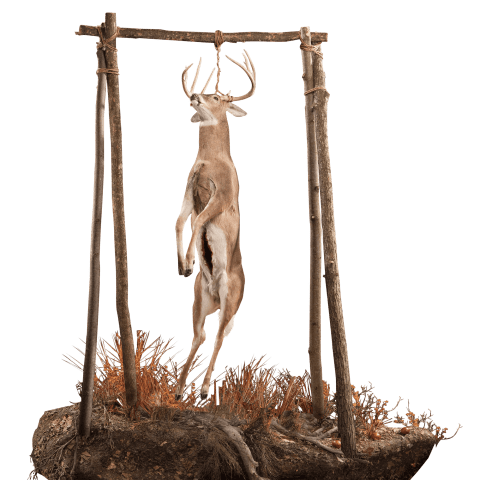 Whitetail lifesize taxidermy