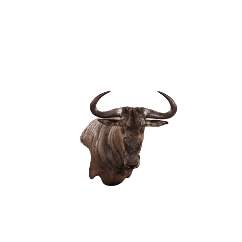 wildebeest wall mount