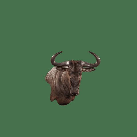 wildebeest wall mount