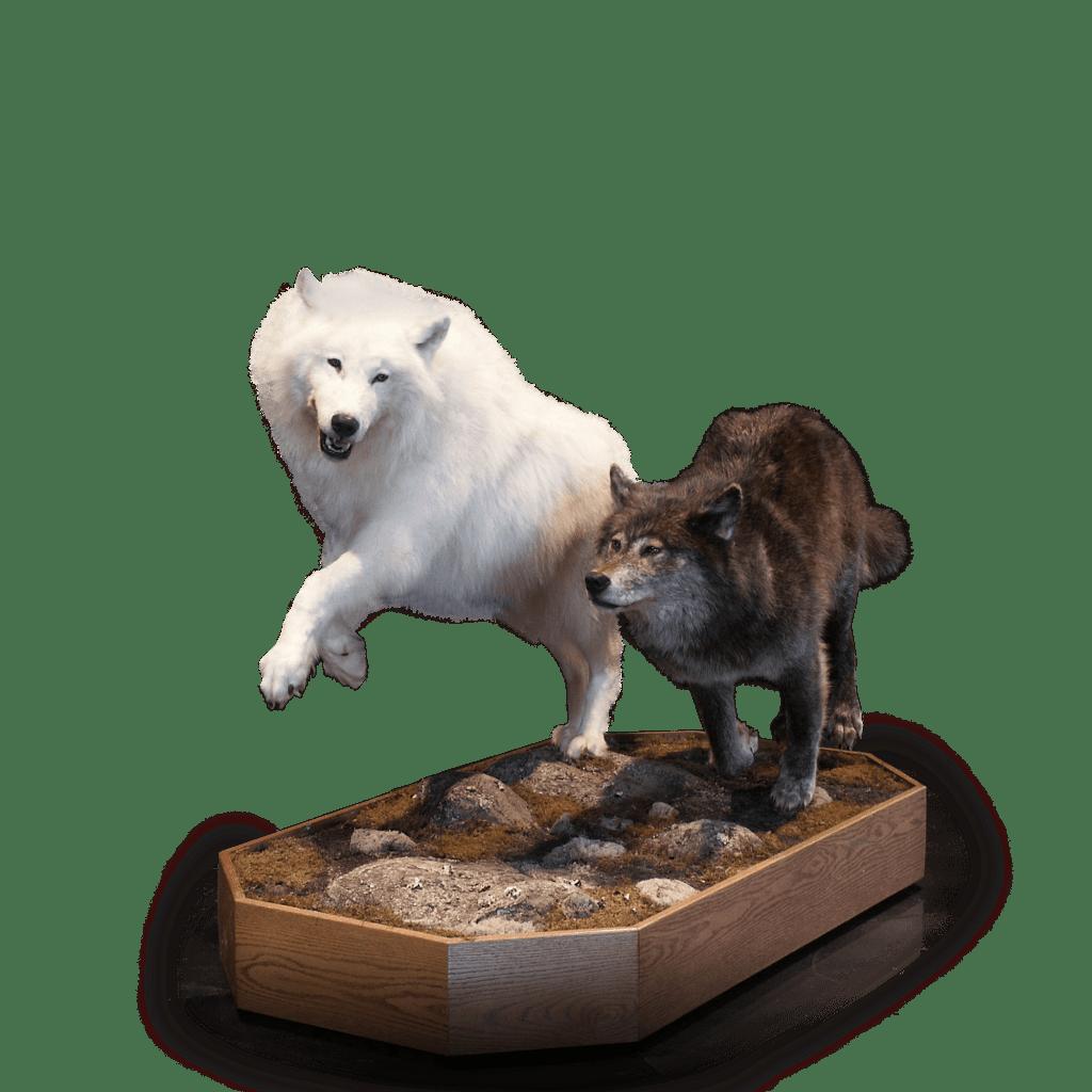 Dual wolves mount