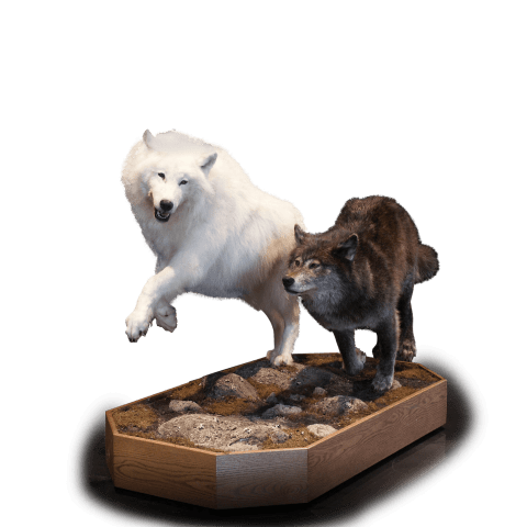 Dual wolves mount