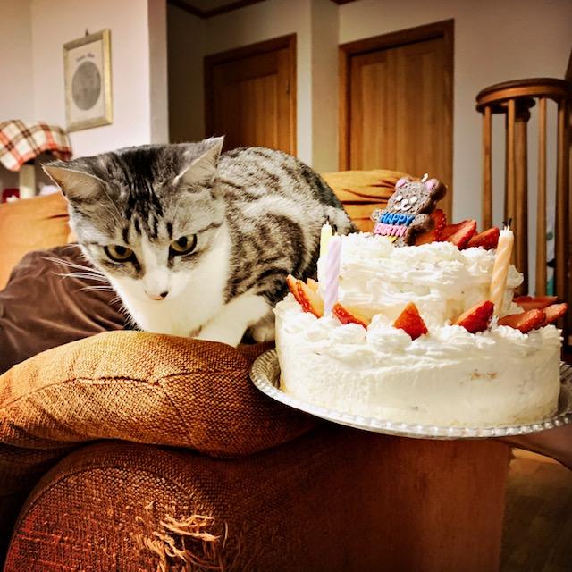ネコとケーキ