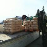 いいやまの酒原料米の出荷