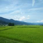 田んぼの風景