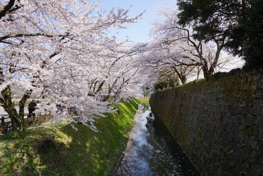 やっぱり桜満開の兼六園・金沢城は綺麗だった !!