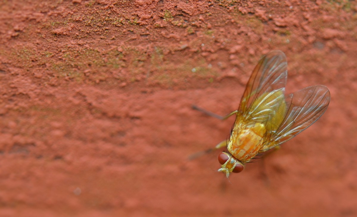 Gnats, Flies and Kids–Are they similar?