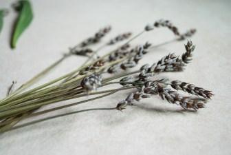 "<img=""lavender"">"