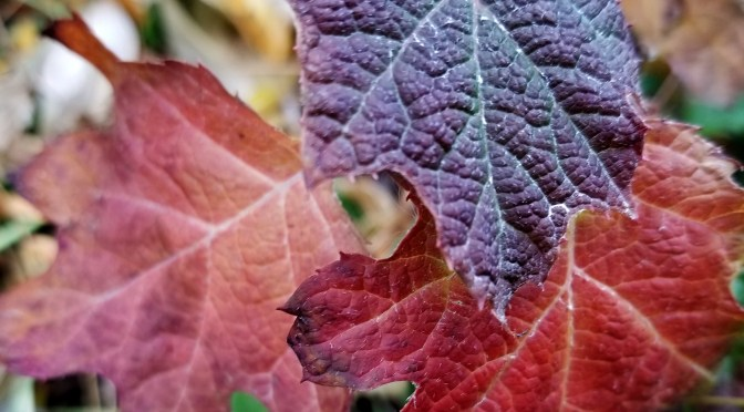 Wishing for fall color? Want a new yard in the spring?