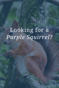 Looking for a Purple Squirrel?
