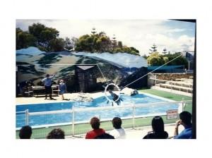 A dolphin show at Atlantis Marine Park.