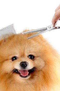 Pamper Your Pet with Grooming Kit