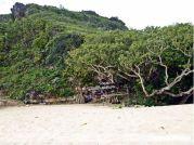 Pemandangan pepohonan yang alami di pantai pok tunggal jogjakarta