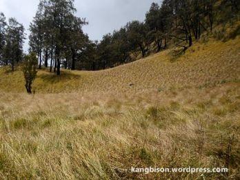 jalur sabana yang membingungkan pendakian gunung lawu dari cetho