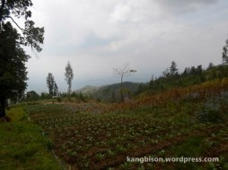 ladang warga sebelum pos 1 pendakian gunung lawu dari cetho