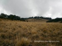 pemandangan sabana pendakian gunung lawu dari cetho